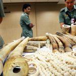 ivory-haul