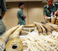 Коло Гонконґу згабали найвекшый контрабанд слоновіны за выше 30 років