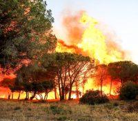 Пожары у Франції дістають поступно під контролю