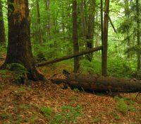 Лісы СР реалізують новый модел старостливості о польовы районы