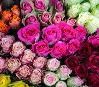 Zo šŷtkŷch fareb ne ekzistuje čorna i syňa ruža