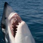 Žralokovy rosnuť zubŷ cilŷj žŷvot