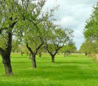 Якостне дерево ся уже не буде спалёвати як біомаса