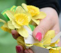 Нарціс- квітoк надїї малёвали в Гуменнім ай Поляци і Мадяри