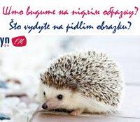 Граме на желаня / Hrame na želaňa 8. 9. 2019