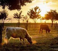Бразілія ся рихтує леґалізовати тяжбу на теріторії первістных жытелїв