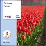 Jak pestovaty tulipanŷ / Як пестовати туліпаны