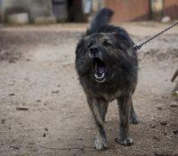 Пропозіція закона триманя пса на ланцку іде зась до парламенту