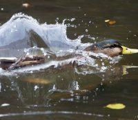 В кошіцькій зоо потвердили вірус пташачой хрипкы