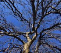 В Пчолинім нелеґално вырубали майже 150 стромів
